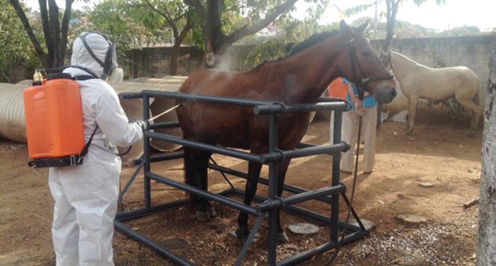 Ações de combate à febre maculosa em Contagem entram na reta final