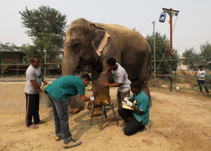 NATUREZA – Índia inaugura primeiro hospital de elefantes