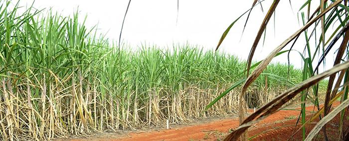 Brasil e China chegam a acordo sobre contencioso do açúcar