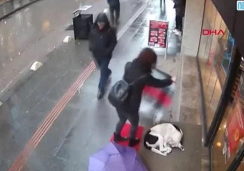 Câmera registra mulher bondosa cobrindo cãozinho com frio